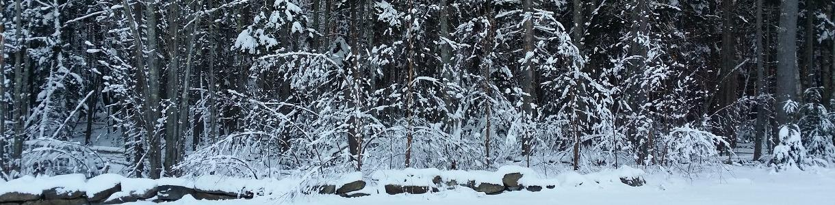 Image of snow covered trees in Boothbay Harbor, Maine